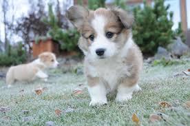 puppy socialization stop fear before it starts u2013 dr yin