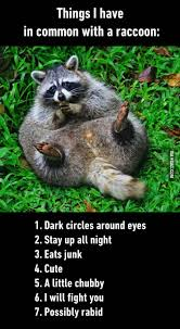 Funny Fight Memes - pretty accurate raccoons humour and animal