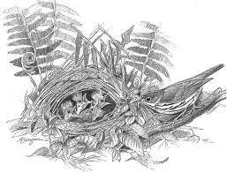 ovenbird breeding birds of north america online