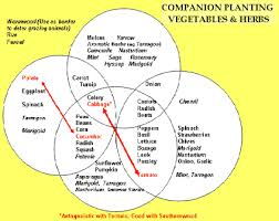 Companion Gardening Layout Planting Companion Vegetables And Herbs And Fruit Tree Companion
