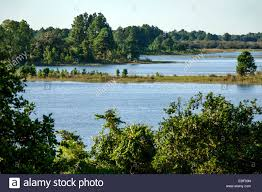 Florida scenery images Orlando florida scenery water lake sinkhole trees stock photo jpg