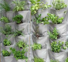 exercise your green fingers with vertical veg