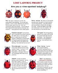 help cornell researchers find the lost ladybugs citizen science