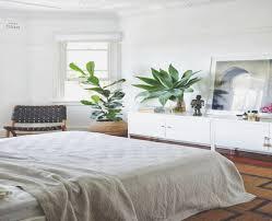 pflanzen für schlafzimmer pflanzen fã r badezimmer 100 images beautiful pflanzen für