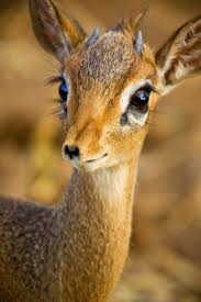 lovely little fawn do you know the lengths us human girls go to