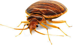how much does a flea exterminator cost
