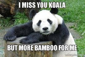Koala Bear Meme - i miss you koala but more bamboo for me confession panda make