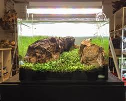 Aquascape Shop Aquarium Gardens Store Display Aquascapes