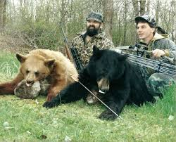 bear hunts bear hunts canada ontario bear hunting black