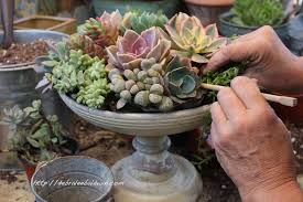 succulent centerpieces how to make a succulent centerpiece