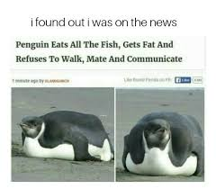 Peguin Meme - penguins meme geek pinterest penguin meme penguins and meme