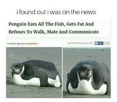 Meme Penguin - penguins meme geek pinterest penguin meme penguins and meme