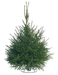 Christmas Tree Buy Online - modest decoration spruce christmas tree buy fresh cut trees online