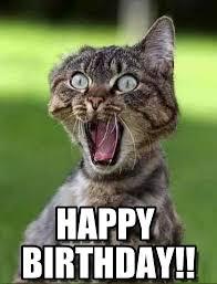 Birthday Meme Cat - happy birthday screaming cat meme on memegen images litle pups