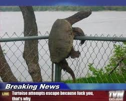 Ninja Turtle Meme - it s worldturtleday and these 5 viral turtles should convince you