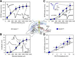 what is 138 311 as a percent increased dosage of high affinity kainate receptor gene grik4
