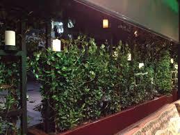 decor dreams u0026 schemes trellis ivy and candlelight a delightful