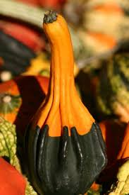 how to preserve decorative gourds gourds decorative gourds and