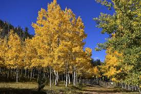 20 colorado hikes spectacular fall color u2014