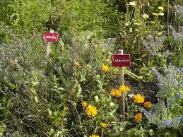 interplanting flowers and herbs in the vegetable garden