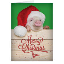 christmas pig pig christmas cards greeting photo cards zazzle