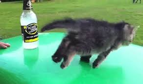 Drunk Cat Meme - kitty just a little drunk cat meme cat planet cat planet
