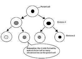 anatomy and physiology of animals the cell wikibooks open books
