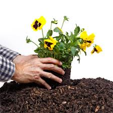 How To Get Your Home Ready For Spring by Spring Gardening Lawn And Garden