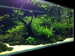 Aquascape Designs For Aquariums Have You Ever Seen A Nice Looking 55 Gallon Page 2 The