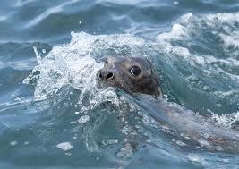 marine u0026 natural history photography ba hons falmouth university