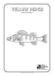 yellow perch coloring page cool coloring pages