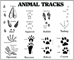 free printable monkey coloring page footprint pages animal