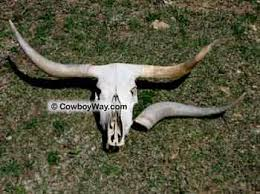horns for sale are cow horns