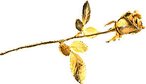 Gold Rose Gold Rose Graphic Desiglitters Com
