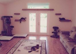 cat wall furniture the useful of cat wall shelves colour story design