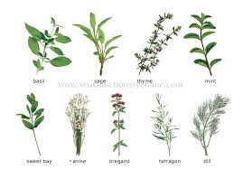 herb chart international food blog herbs and spices 7 international herbs