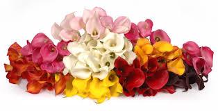 november seasonal flowers 18 nature s finest november wedding flowers everafterguide