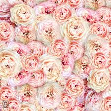 The Pink Peonies by Pics For U003e Pink Peonies Background Vision And Mood In Decor