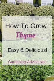 903 best garten images on pinterest flowers garden gardening