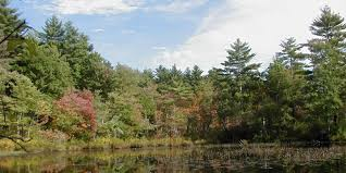 Rhode Island forest images Division of forest environment rhode island department of jpg