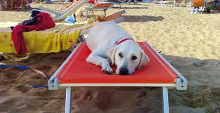 dog friendly holidays bibione moment fun special