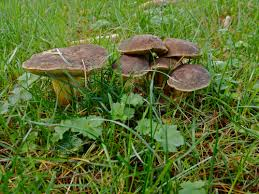 delicacy in my front yard how u0027s it going eh