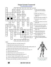 organ systems crossword puzzle 5th 8th grade worksheet lesson