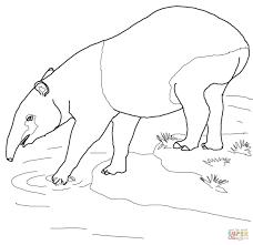 malayan tapir coloring page free printable coloring pages