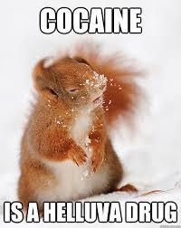 Bear Cocaine Meme - i fookin love cocaine cover squirrel quickmeme