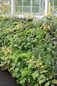 herb wall greencube garden and landscape design uk our chilli pepper