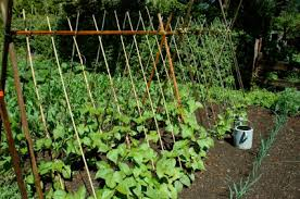 Growing Pumpkins On A Trellis Trellises And Cages