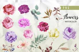 Burgundy Flowers Watercolor Burgundy Floral Elements Peonies And Roses Boho Style