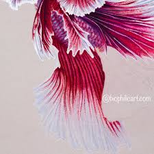 how to draw fish fins in colored pencil