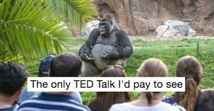 Funny Gorilla Meme - memebase harambe all your memes in our base funny memes
